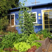 Photo Thumbnail #1: Our highly productive garden organic vegetable...