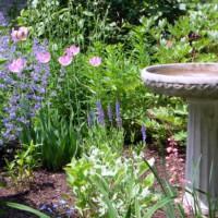 Photo Thumbnail #13: More tulips in the patio garden . . .