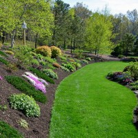 Photo Thumbnail #4: Ground phlox also provide early color on the...