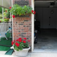 Photo Thumbnail #5: Red geranium and aparagus fern on brick.  Red...