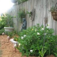 Photo Thumbnail #4: along the fence