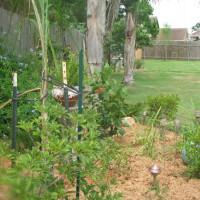 Photo Thumbnail #3: back garden