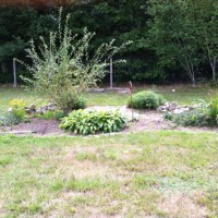 Photo Thumbnail #4: Now, July, a little drab.  Thinking of removing...