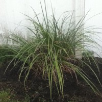 Photo Thumbnail #14: Added some grasses. Nothing special, but they...