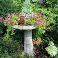Photo Thumbnail #6: Birdbath as a Succulent Garden Planter - To see...