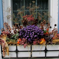 Photo Thumbnail #17: Our Fairfield Home & Garden's Fall Window Box...