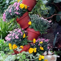 Photo Thumbnail #14: Our Fairfield Home & Garden's tipsy-pots...