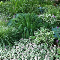 Photo Thumbnail #3: Hostas, daylilies and shade tolerant ground...