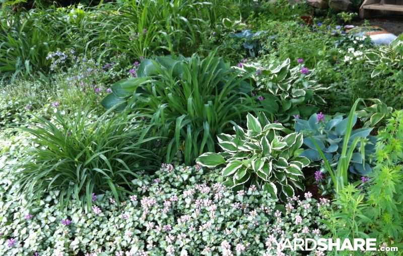 Landscaping Ideas My Front Yard Perennial Garden In Ontario
