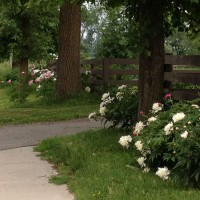 Photo Thumbnail #4: Both sides of driveway from road looking north....