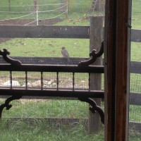 Photo Thumbnail #4: I was taking a picture of a Robin that wanted...