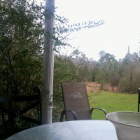 Photo Thumbnail #2: Taken on 12/25/12 Shrubs enclosed back porch