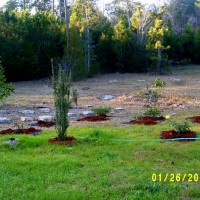 Photo Thumbnail #26: Feb 2013 planted over 80 roses