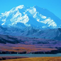 Photo Thumbnail #11: Denali ..Tundra in bloom in the sun