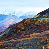 Photo Thumbnail #2: Tundra in bloom as road wraps the Mountainside