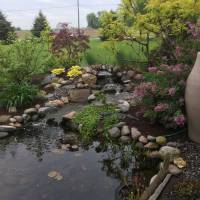 Photo Thumbnail #5: Plants around water feature from left to right....