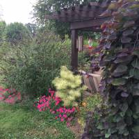 Photo Thumbnail #1: Patio Garden in Late summer 2016. From left to...