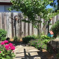 Photo Thumbnail #2: Redbud tree and Peonies in foreground