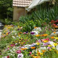 Photo Thumbnail #1: My garden in Switzerland <a...