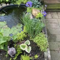 Photo Thumbnail #4: Small pond