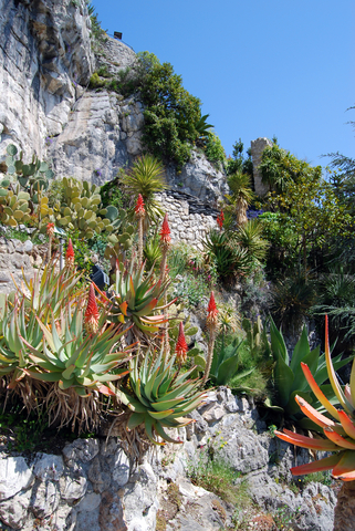 Air Plants in their native habitat
