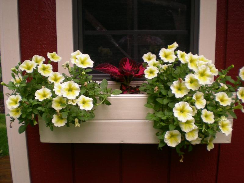 Window Box Planter Flowers Window Flower Boxes Ideas