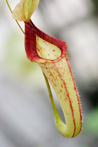 Growing Carnivorous Plants