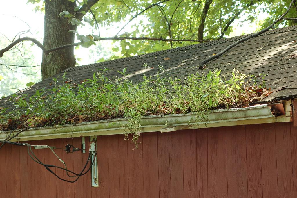 Landscaping Ideas & Garden Ideas > Gutter Garden