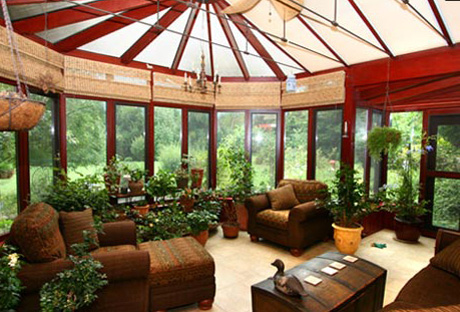 Sunroom Potted Plants