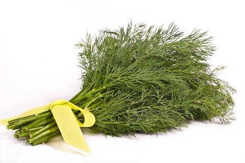 Herb Garden - Dill