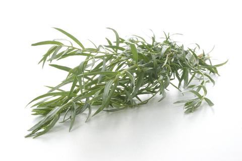 Herb Garden - Tarragon