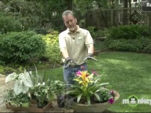 Video - May Annuals
