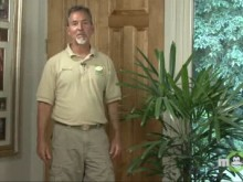 Video - July Houseplants