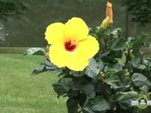 Video - July Tropical Flowers