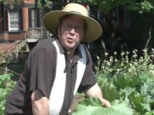 Video - Vegetable Garden Pt1