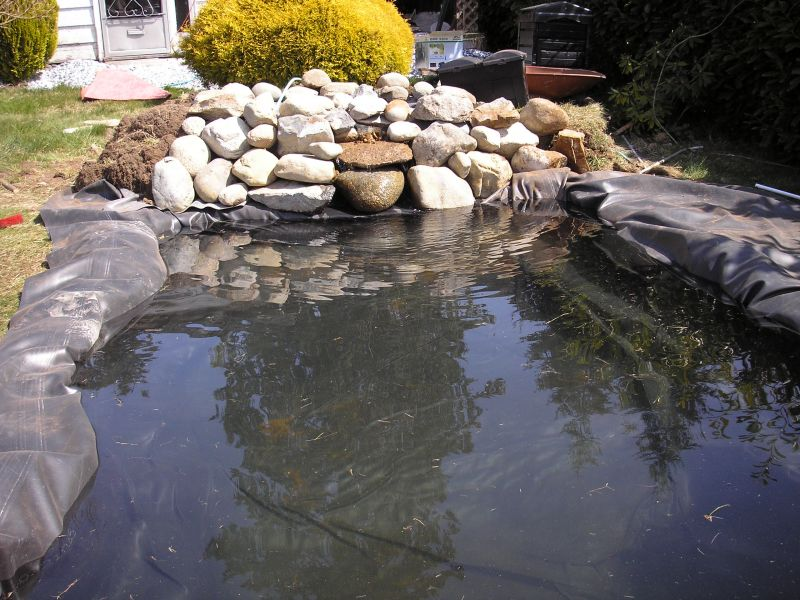Add Rocks to Your Pond