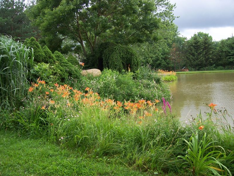 Country Wild Flowers on a River
