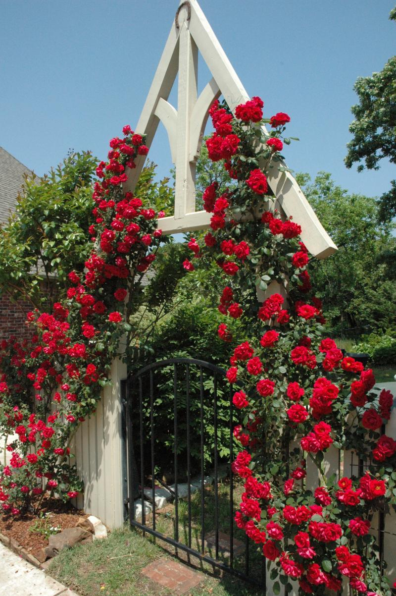 Garden Gate Entry
