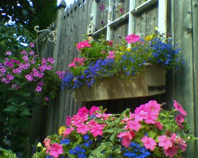 Plastic Window Boxes