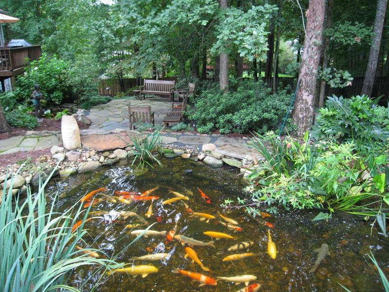 Add Plans and Koi to Your Pond