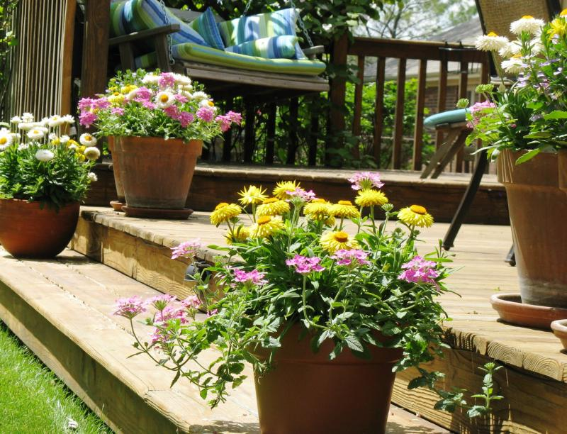 Potted Plants on Deck Steps