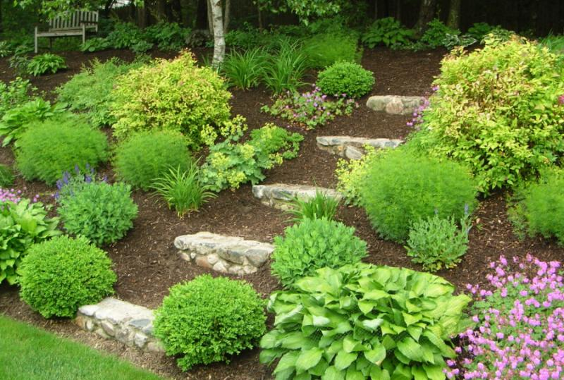 Landscaping Ideas For Shady Hillside : Landscaping ideas gt the challenge of a hill yardshare