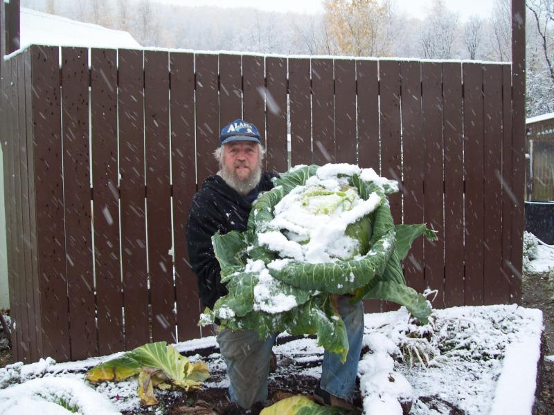 Gary and the huge cabbage