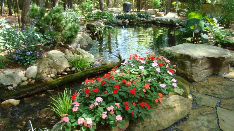 Natural Looking Water Garden