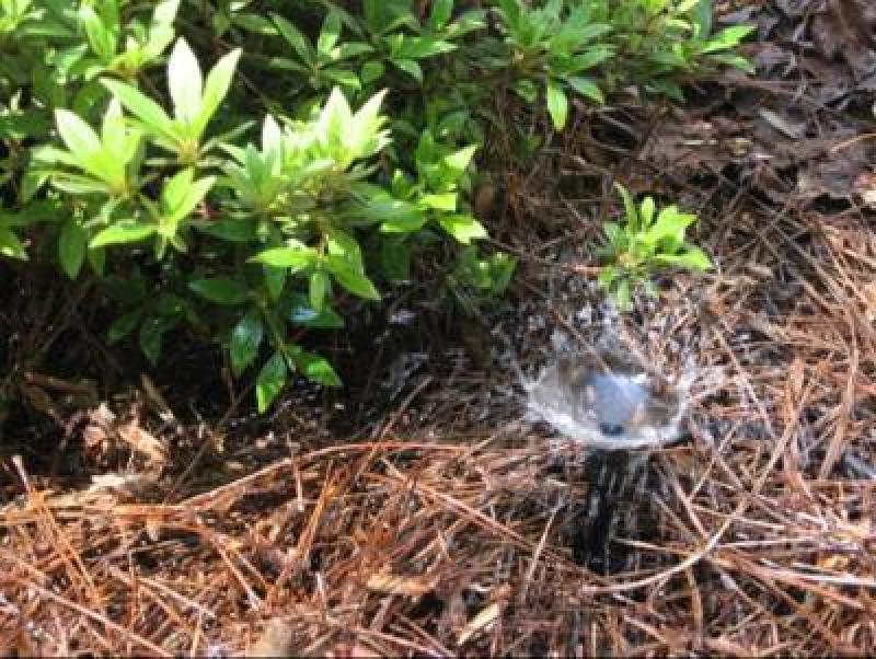 Micro Bubbler Sprinkler