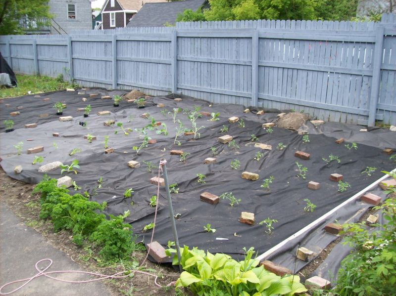 Yard Landscaping Pictures & Ideas: my vege garden part 1 have palnted