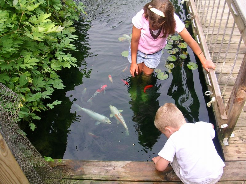 Small koi ponds are fun for kids