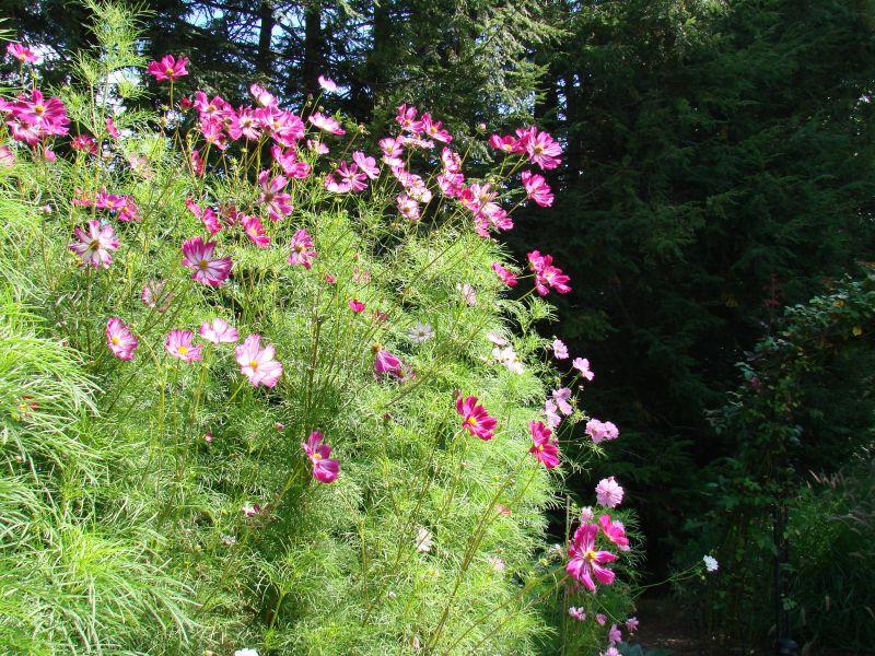 Cutting Garden Ideas