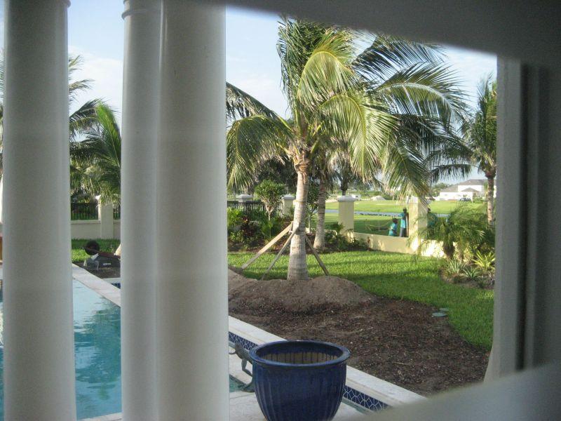 Transplanting a Palm Tree