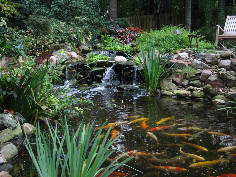 Waterfall and Koi Pond